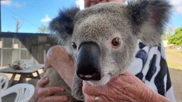 コアラ抱っこ エアリービーチ